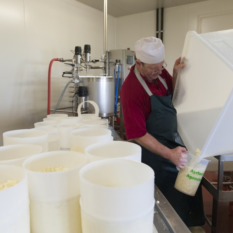 Apostles Whey Cheese Job Opportunities