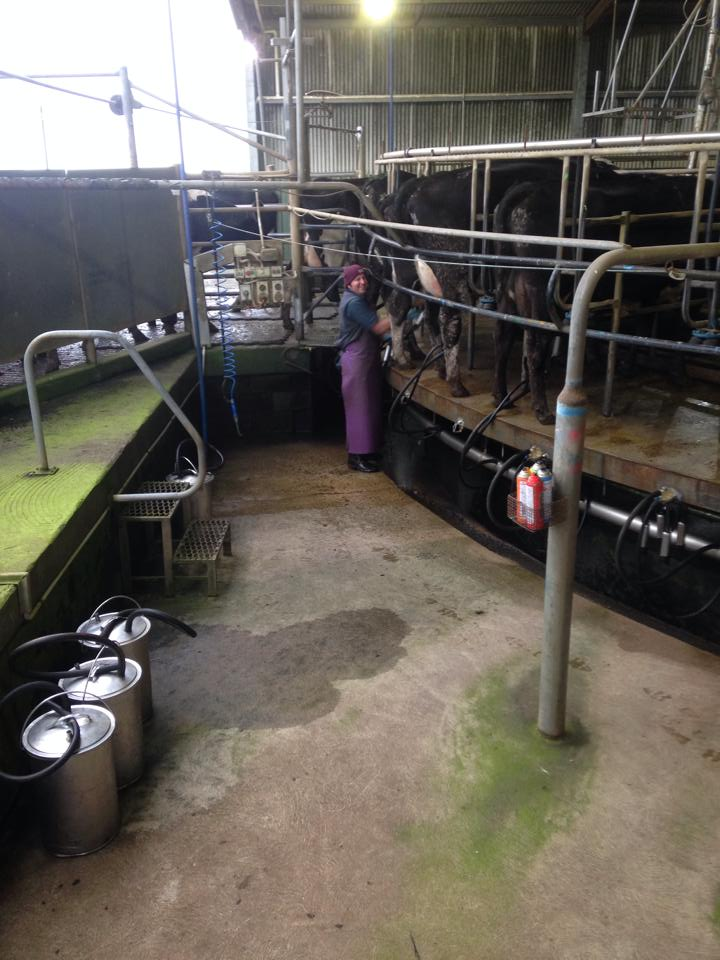 Luke Benson, Milking Time