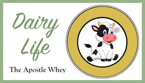 Apostle Whey Cheese Dairy Life Series Dinkus