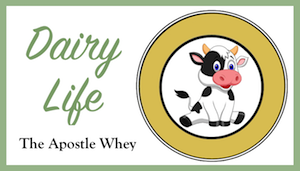 Apostle Whey Cheese Dairy Life Series Dinkus